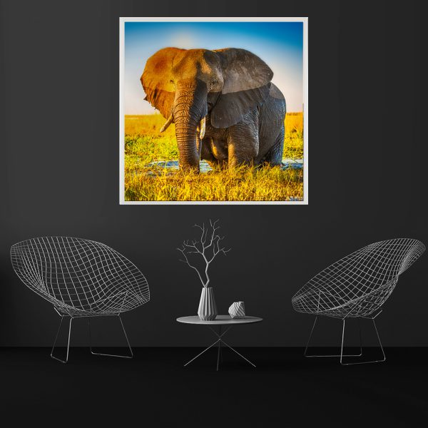 LED Bild Elephant
