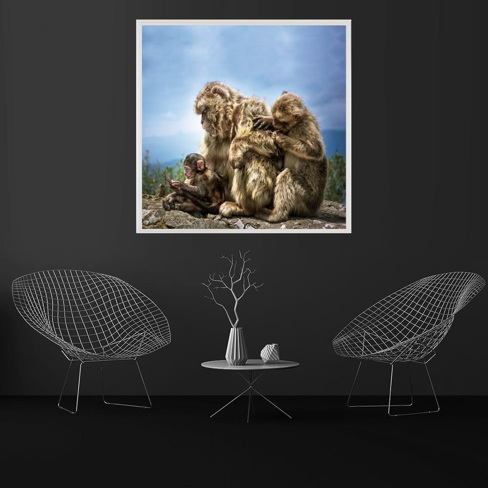 LED Bild Wildlife Affen Gibralta