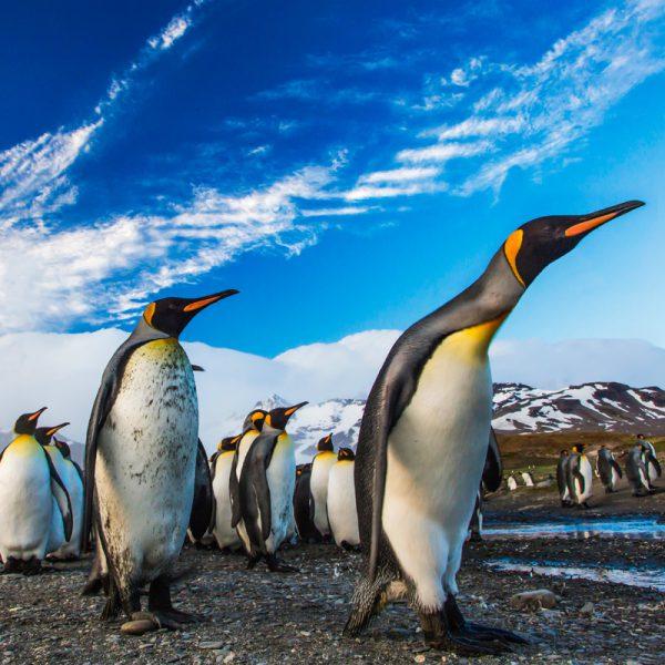 Lichtbild Pinguine