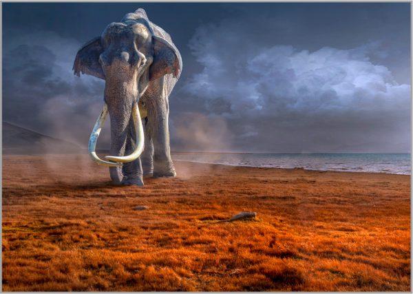 Wall Art Mammut