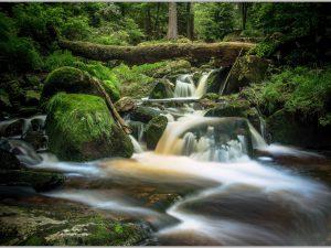 LED Bild Wald mit Bachlauf