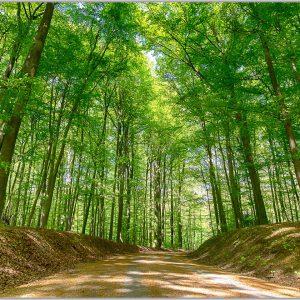 LED Bild Wald im Frühling