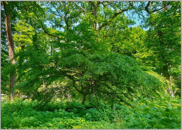 LED Bild Green Wood