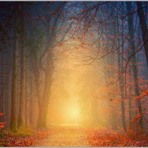 LED Bild Herbstwald