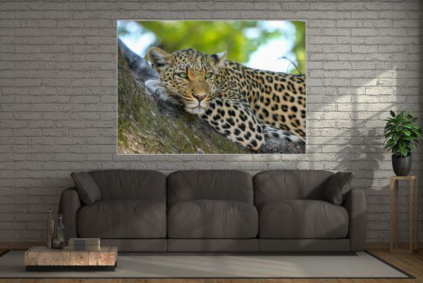 Wall Art Leopard