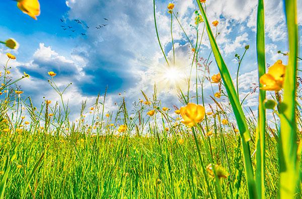 Led Bild Blumenwiese