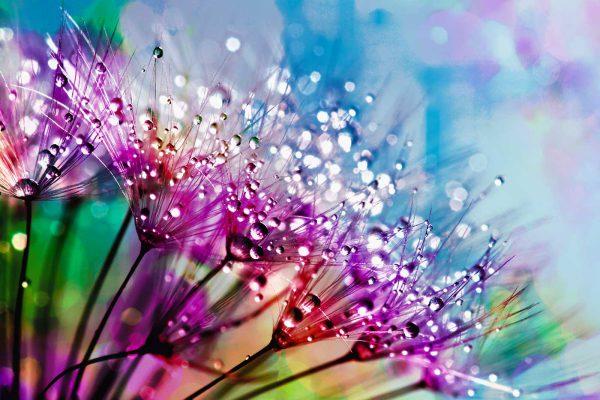 LED Bild Blume im Morgentau