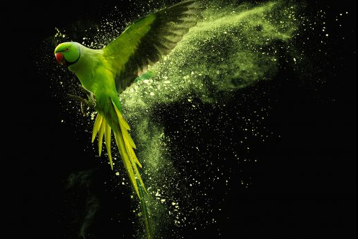 LED Bild Papagei